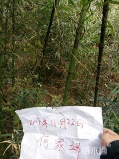 高度1.5厘米花斑竹